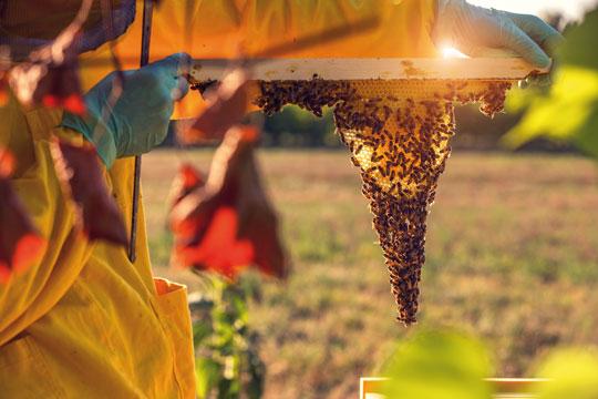 01_Fatevobees-mission-come-lo-facciamo-famiglia-miele-in-favo-apicoltori
