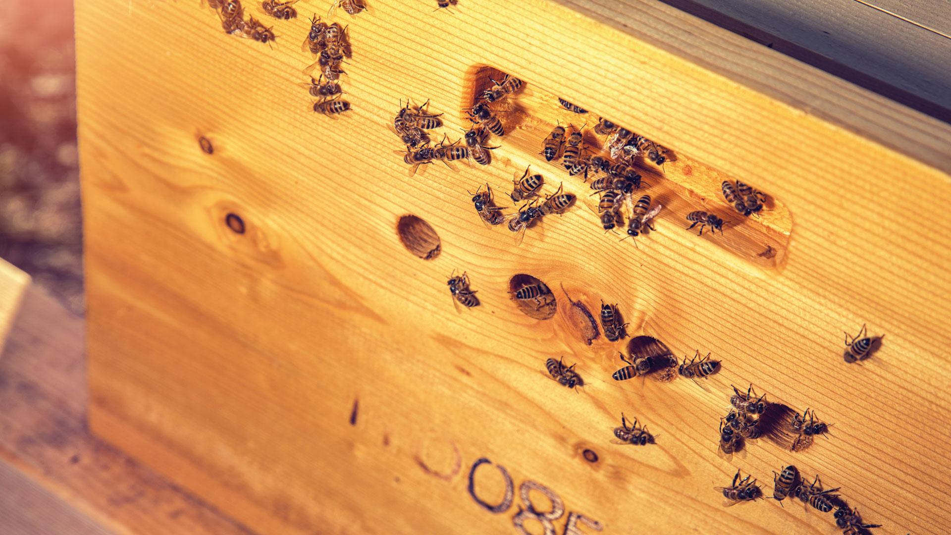 02_Fatevobees-mission-come-lo-facciamo-famiglia-miele-in-favo-apicoltori