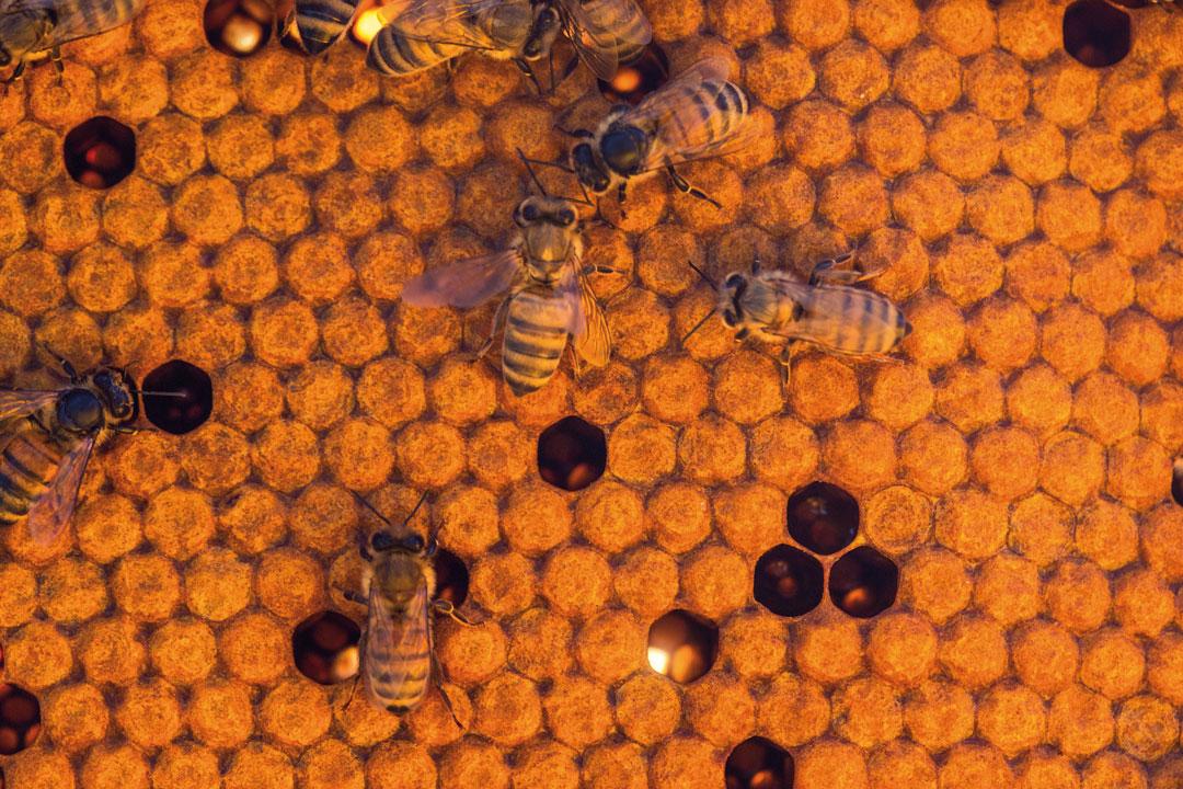 03_Fatevobees-mission-come-lo-facciamo-famiglia-miele-in-favo-apicoltori