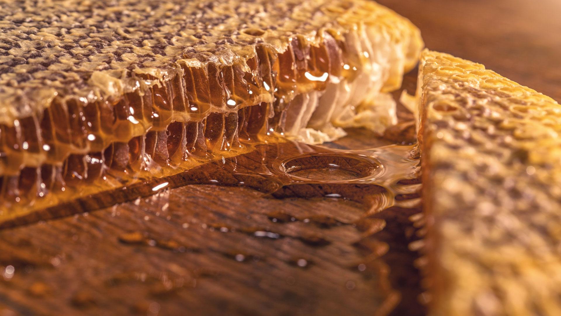 il-gusto-fatevobees-miele-in-favo-apicoltori-pino-fattori